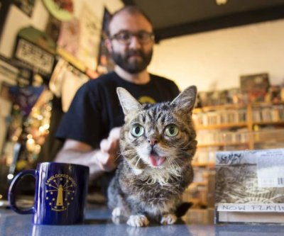 Famous cat Lil' Bub debuts new song from upcoming album