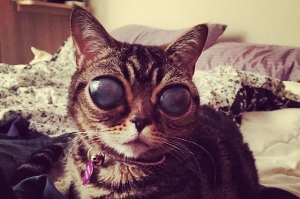 Watch Alien Cat S Giant Eyes From Genetic Disorder