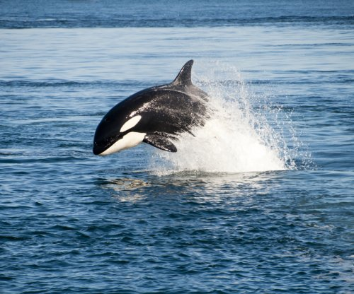 California bans orca captivity and breeding