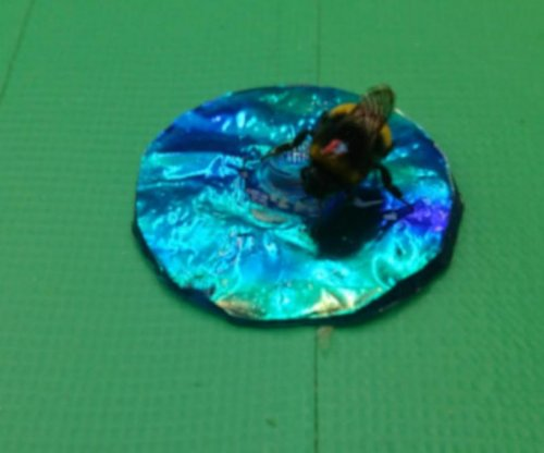 Iridescence confuses bumblebees