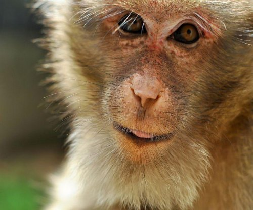 Monkey study boosts theory that fewer calories can extend life