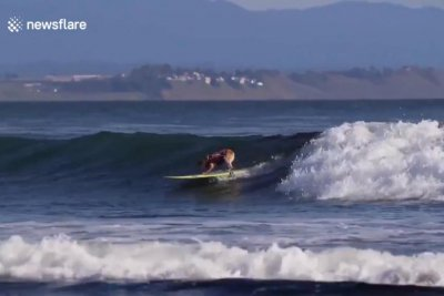 Surfing dog tackles waves solo in California