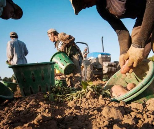 Proposed law would give legal status to undocumented farmworkers