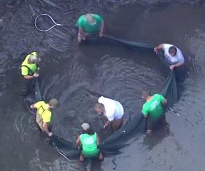 Alligator removed from pond next to Michigan school