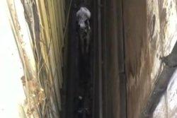 Dog rescued from narrow gap between San Francisco buildings