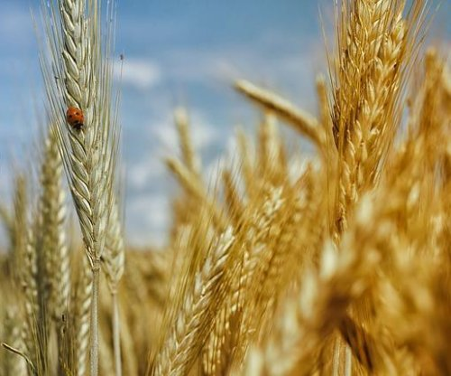 Study finds whole grains help extend life