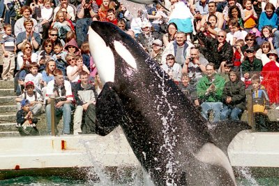 SeaWorld employee posed as animal rights activist to spy on critics, CEO acknowledges