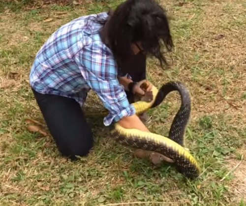 Researcher shocks onlookers by tackling massive wild snake