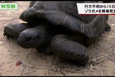 Escaped tortoise found two weeks later, 164 feet from zoo