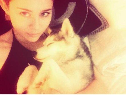 Miley Cyrus 'devastated' over death of her dog Floyd