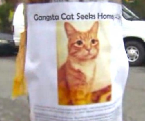 New York fliers seek 'homey' for 'Gangsta Cat'