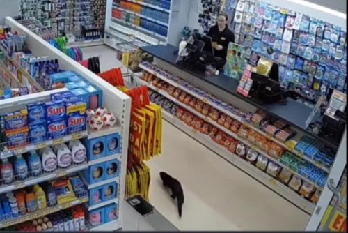 Otter gives workers a surprise at grocery store