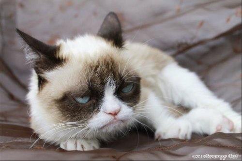 Grumpy Cat gets Friskies endorsement deal