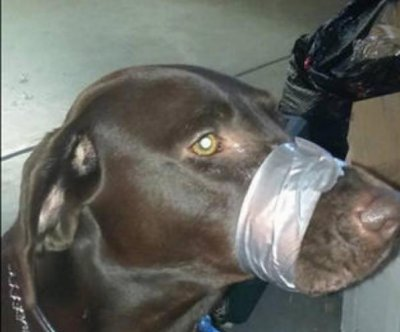 Woman with duct-taped dog charged with animal cruelty