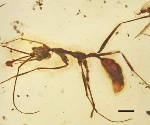 Cretaceous fossils illuminate early ant evolution