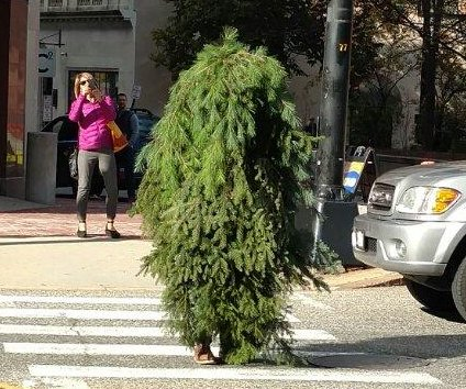 Man wearing 'bizarre' tree costume arrested for blocking traffic in Maine
