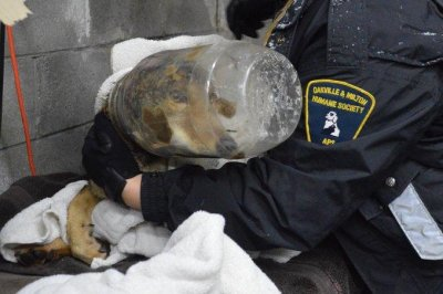 Coyote with plastic tub stuck on head rescued in Ontario