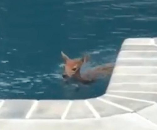 Deer visits New Jersey home for daily swim in pool