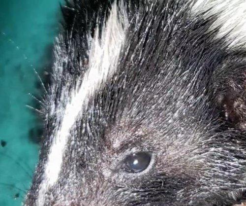 Walmart store evacuated when skunk wanders inside