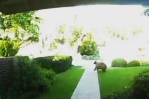 Baby and grandma's bear encounter captured on home camera