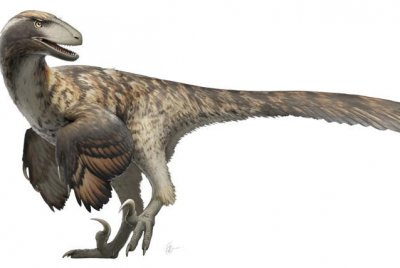 Unlike 'Jurassic Park,' real raptors may not have hunted in packs