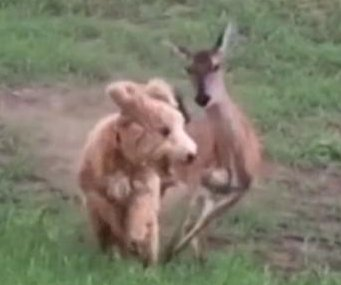 Deer chases cowardly dog across Mississippi park