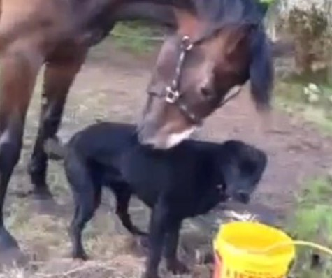 Lonely horse forms close bond with rescue dog