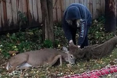 Entangled deer rescued from hammock in New York state
