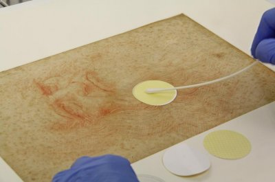 Survey of microbes reveals some history of Da Vinci's drawings