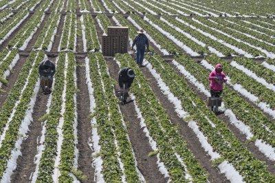 Strawberries, spinach, kale top 2021 'Dirty Dozen' contamination list