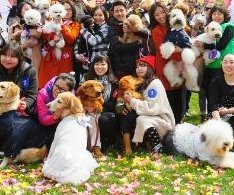 21 dog couples tie the knot in Beijing wedding ceremony