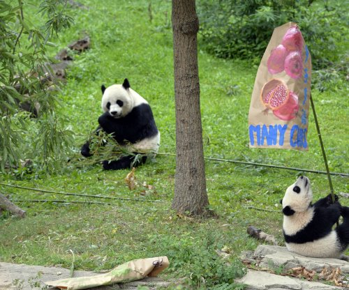 Washington DC's National Zoo hopeful for panda pregnancy
