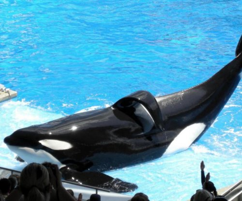 SeaWorld killer whale, subject of 'Blackfish,' Tilikum dies