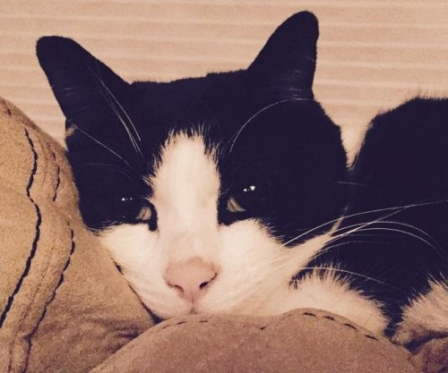 Cat credited with saving Ohio family from carbon monoxide