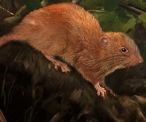 Scientists find tree-dwelling, coconut-eating rat in the Solomon Islands