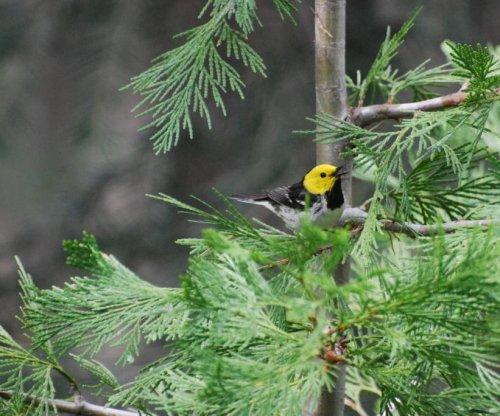 Springtime bird calls help scientists study global warming