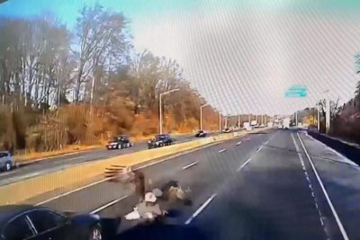 Eagle survives crash through windshield of truck on highway