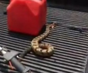 Headless rattlesnake attempts to attack Alabama man