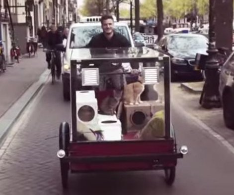 Dutch man rides 'Kittymobile' bike 300 miles with his cats