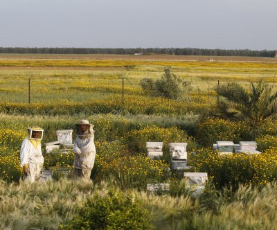 Study: Bees aren't the only important pollinators
