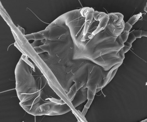 Dust mite study may help scientists identify allergenic proteins