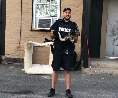 Loose python found wandering Ontario city's downtown