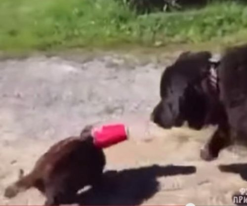 Dog rescues cat from nefarious plastic cup