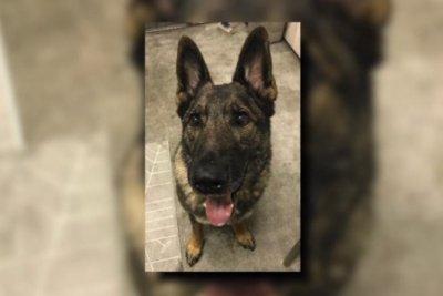United mistakenly sends Kansas-bound dog to Japan
