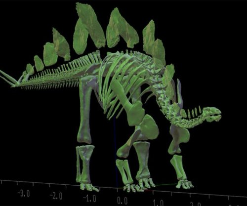 Young stegosaurus weighed 3,527 pounds