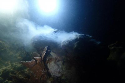 Scientists combine, organize 40 years worth of data on coral spawning
