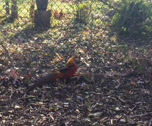 Police seeking owner of exotic bird found in Chicago park