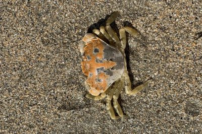 Study find crabs' appearance matches habitat
