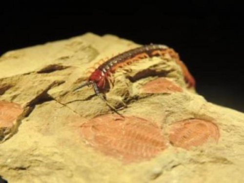 Scientists say 'big bang' of life eons ago fits theory of evolution
