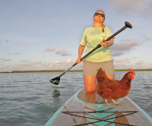 Florida woman takes pet chicken paddle boarding
